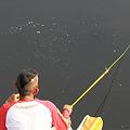 Photos: 2010.06.12 和泉川 釣り師