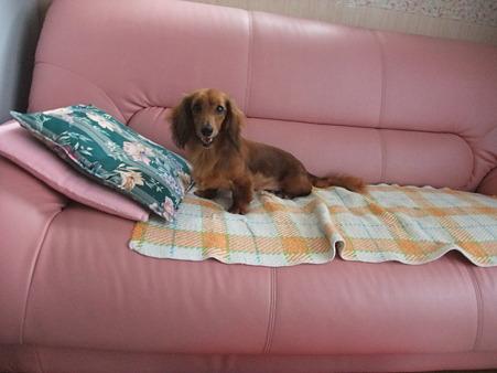 さっそくソファーでくつろいでいました