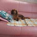 Photos: さっそくソファーでくつろいでいました