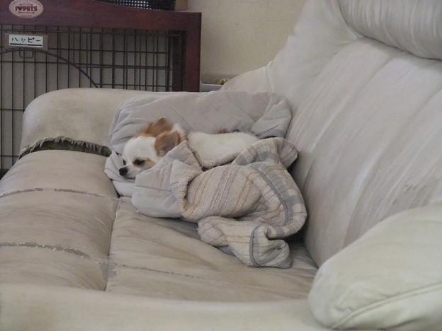 Photos: このソファーがすき