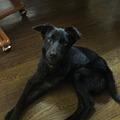 Photos: 父と違い出来のいい仔犬です