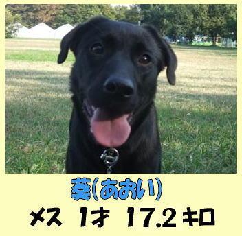 Photos: 葵ちゃん
