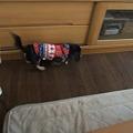 Photos: 大きな犬も怖がらず