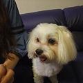 Photos: ハクは普通の可愛い犬!