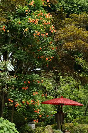 ノウゼンカズラ、海蔵寺!(100710)