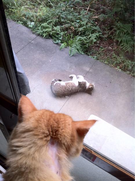 挑発的な猫ちゃん(^^;;