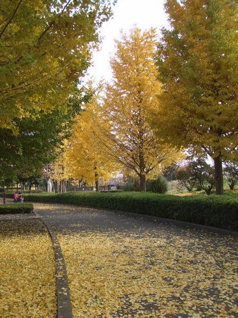 Photos: 秋留台公園紅葉
