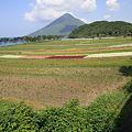 写真: 100516-64お花畑と開聞岳