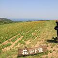 Photos: 110514-27花の小径