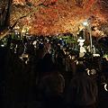 写真: 大山寺の紅葉ライトアップ