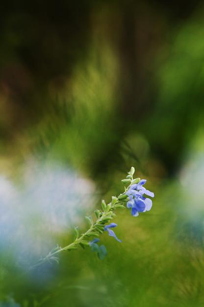 青い花の緑のオーラ