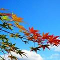 秋峰の紅葉