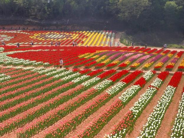 高原の花絵風景