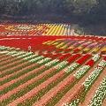 Photos: 高原の花絵風景