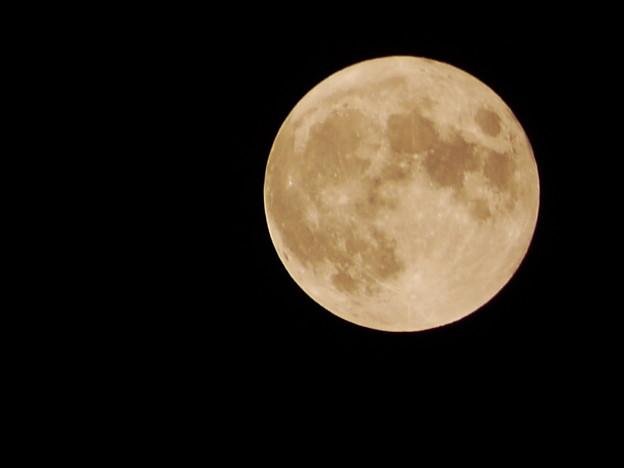 Photos: 月が綺麗ですね