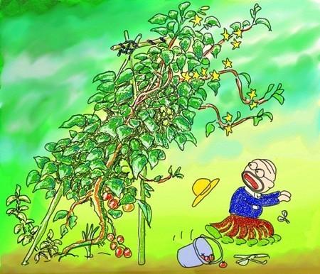 トマト窒素過多