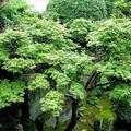 Photos: 雨の庭 2 120701