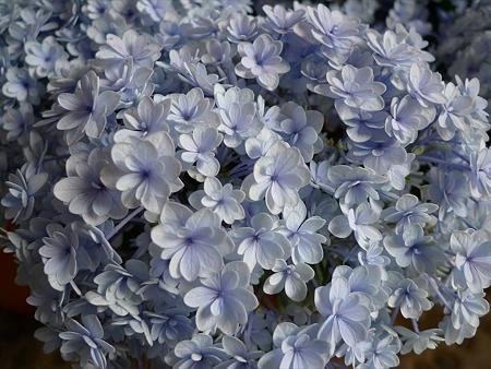 筥崎宮~紫陽花園(2)