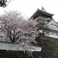小倉城・勝山公園の桜(2)