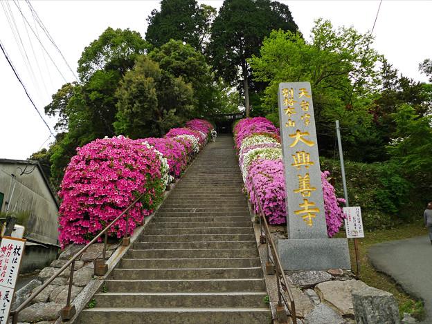写真: 大興善寺(2)