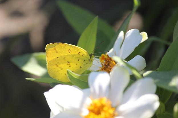 花と蝶 (6)