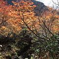 IMG_8907那須 茶臼岳 姥ヶ平の紅葉2