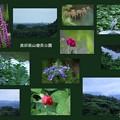 7月の奥卯辰山 健民公園