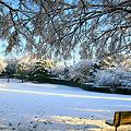 Photos: 雪の四季の森公園