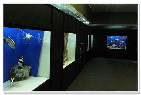 水族園展示
