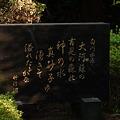 Photos: 白川水源
