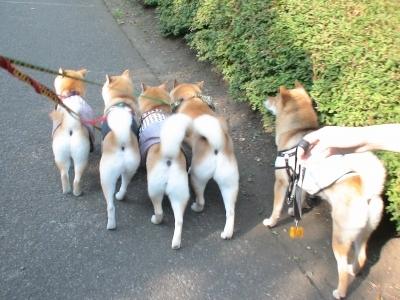 みんなで散歩