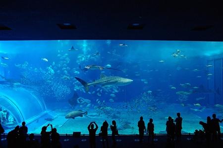 ジンベイザメが飼育されている「黒潮の海」