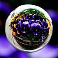 花玉紫 -パンジー-