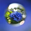 玉玉 -紫陽花2010-