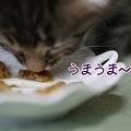 Photos: うまうま