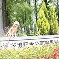 20100516 鶴見緑地公園 バラ